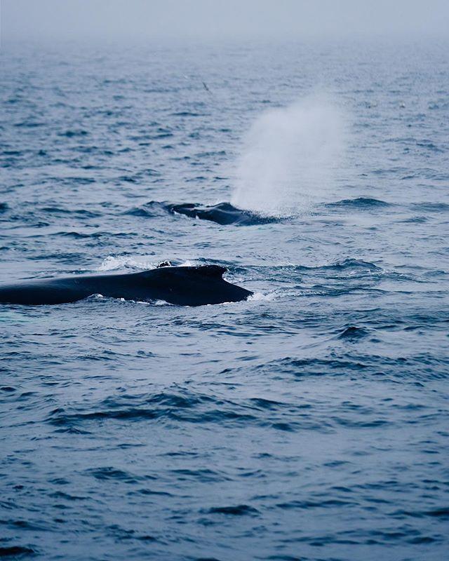 🐳 #vscocam #vsco #massachusetts #capecod #humpbackwhales #fujixt2