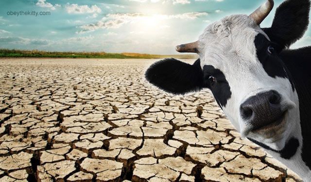 cow_farts_global_warming_drought-1.jpg
