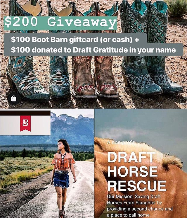 $ 2 0 0  G I V E A W A Y 👢  I've teamed up with my favorite bloggers to gift a lucky follower a $100 gift card to Boot Barn (or cash option), and $100 to Draft Gratitude, a non-profit horse rescue in NH, donated in the winner's name! ⁣ TO ENTER:⁣ 🐴 LIKE this photo 🐴 FOLLOW @influencergiveawaygals and everyone they are following 🐴 TAG a friend in the comments below⁣ 🐴 BONUS: tag additional friends in separate comments, or add to stories  Giveaway ends on 8/5 at 11:59pm EST.  Winner will be announced on 8/6!  MUST be following all accounts to win. 🐴 Win Cool Stuff & Save The World 🐴  Disclaimer: This contest is in no way sponsored, administered, or associated with Instagram, Boot Barn or Draft Gratitude.  By entering, entrants confirm they are at least 18-years-old, release Instagram and all brands of responsibility, and agree to Instagram's terms of use. 👢 Good Luck! 👢