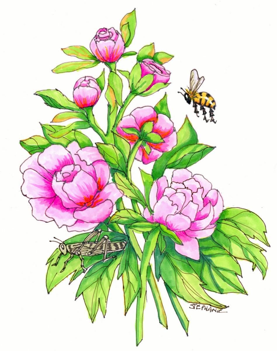 04-Nature Illustration, Stephanie Sipp, Flowers-004.jpg