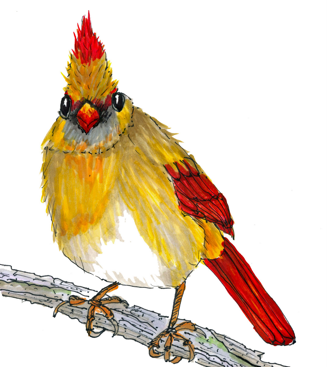 """Female Cardinal"",  4 x 5 inches"