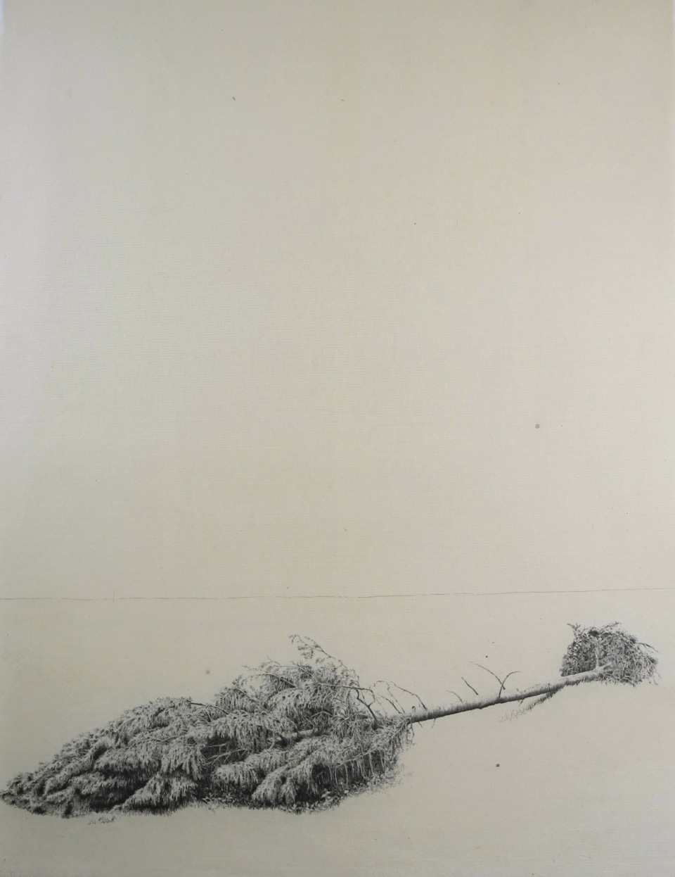 Fallen Tree III  2018 SOLD  Monotype drawing: 65 x 49 cm approx.