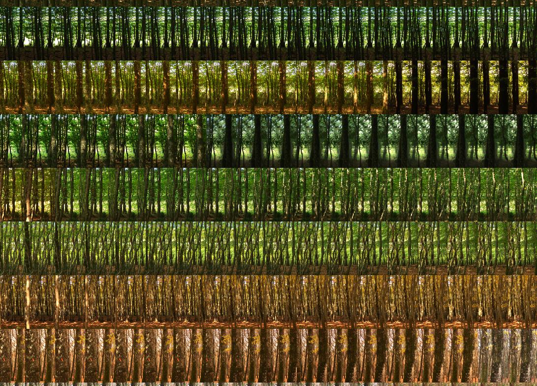 La Taille des Antes: 24 hours x 60 minutes  2008 (Detail)  Pigment print; 110 x 150 cm  Edition of 7