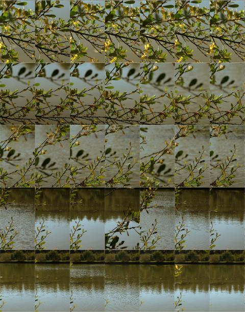 L'Étang de Pezières IV : 48 hours x 60 minutes  2018 (Detail)  Pigment print; 200 x 140 cm  Edition of 7