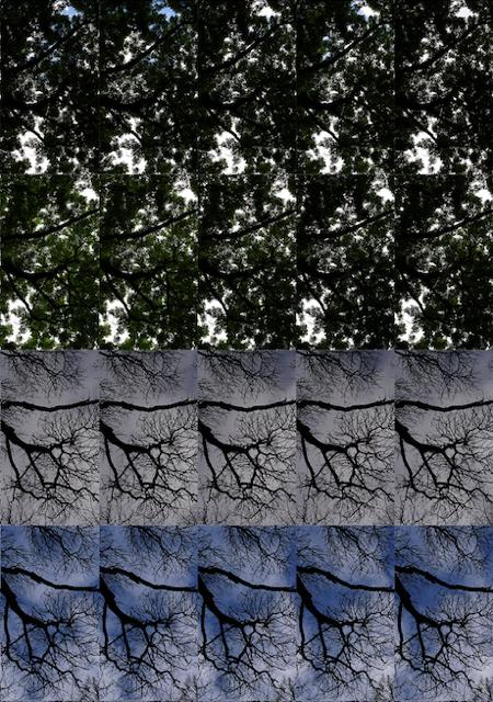 Le Bois de Mametz: 24 hours x 60 minutes  2018 (Detail)  Pigment print; 110 x 150 cm  Edition of 7