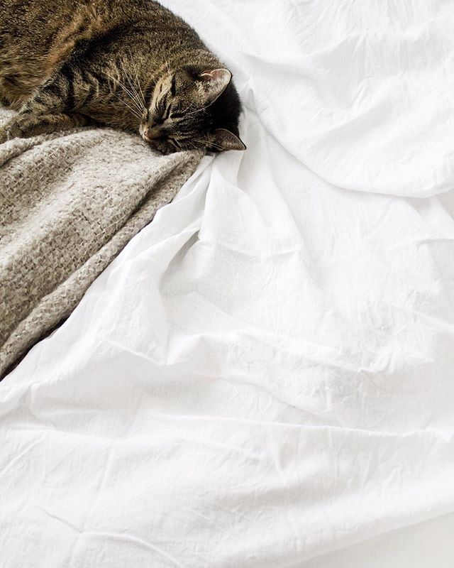 """""""Pets are humanizing. They remind us we have an obligation and responsibility to preserve and nurture and care for all life."""" - James Cromwell 💕🐱 #animalchiropractic"""