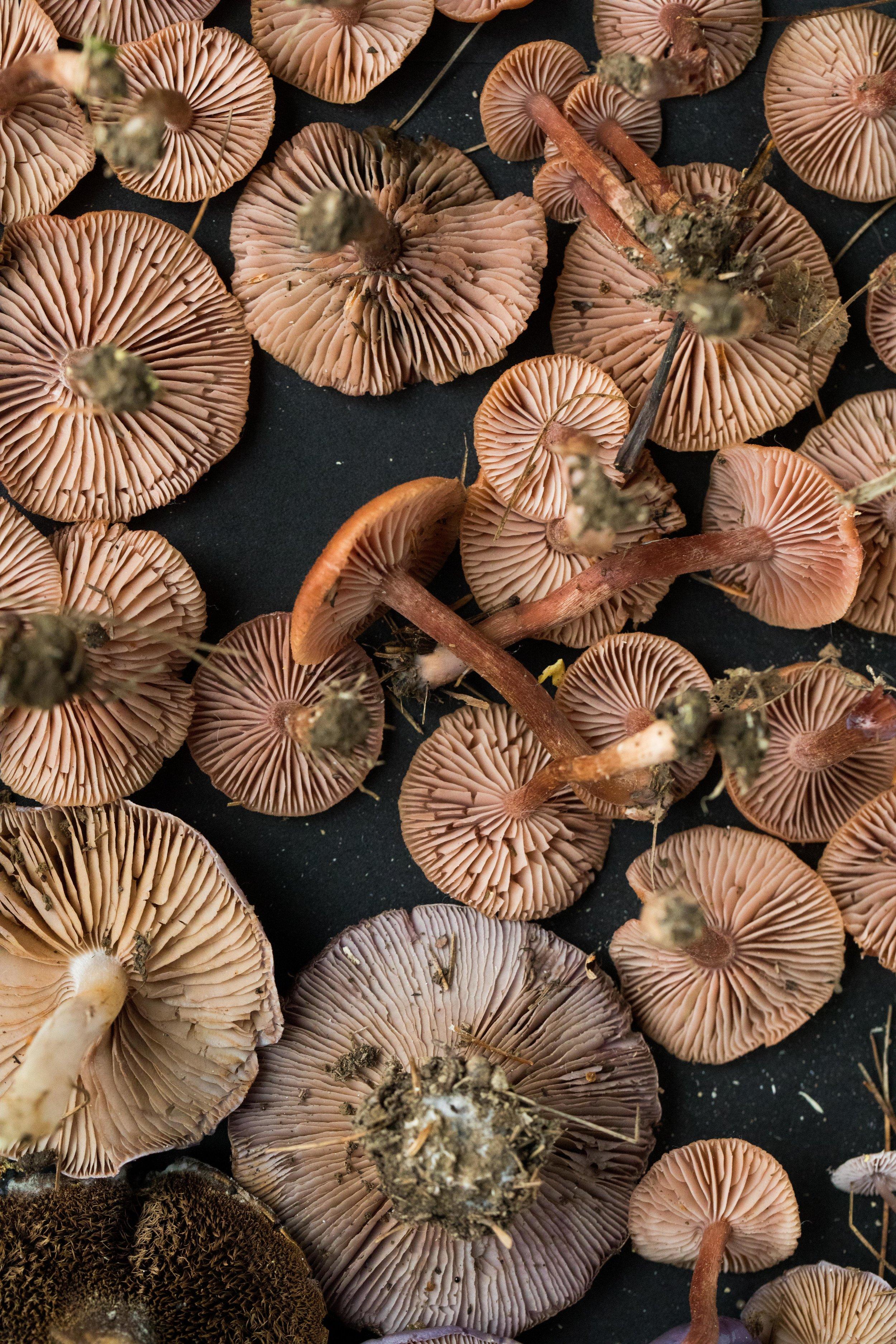 mushrooms_vertical.jpg