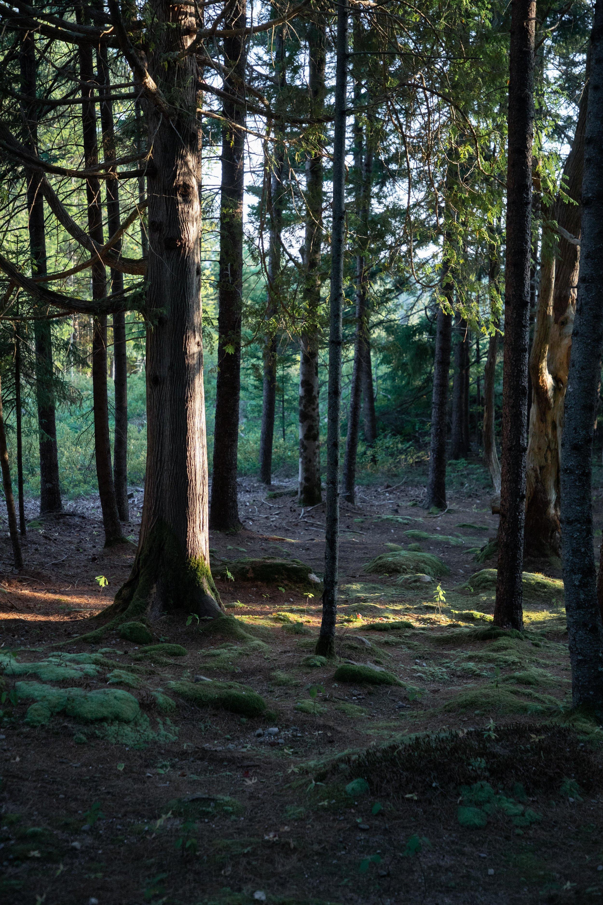 revisedforest2.jpg