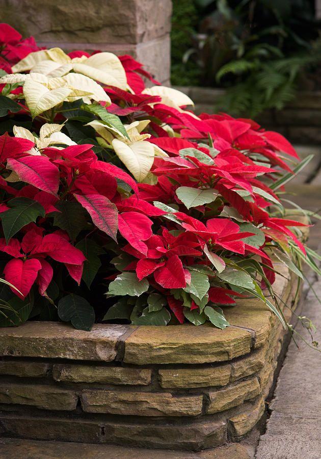 3f9e2ae767a8ef32894f9805fab7663f-elegant-christmas-christmas-carol.jpg