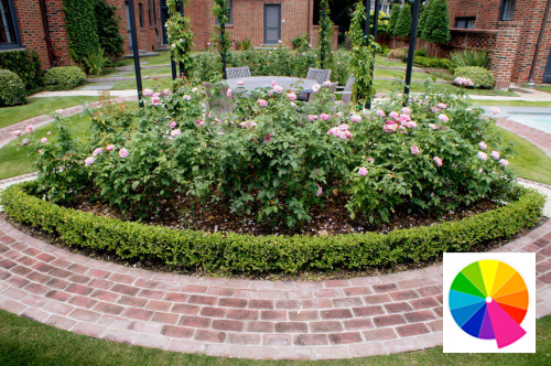 Pinkbrings elegance and sweetness to a garden's entertainment area.