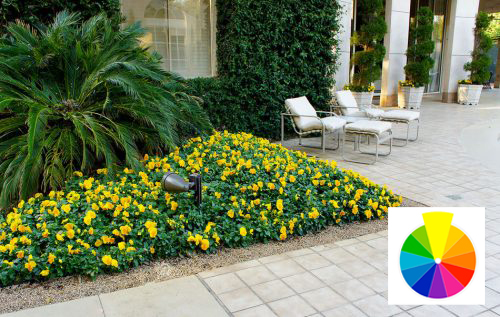 Warm colors likeyellowenergize the garden.