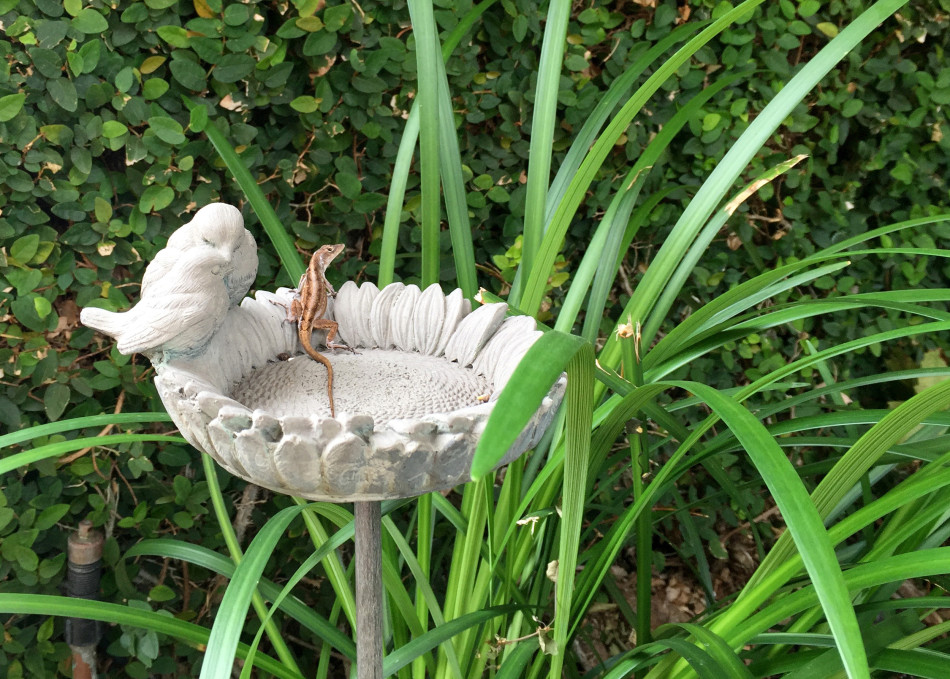 Right:  A happy lizard enjoys a seat in the garden.