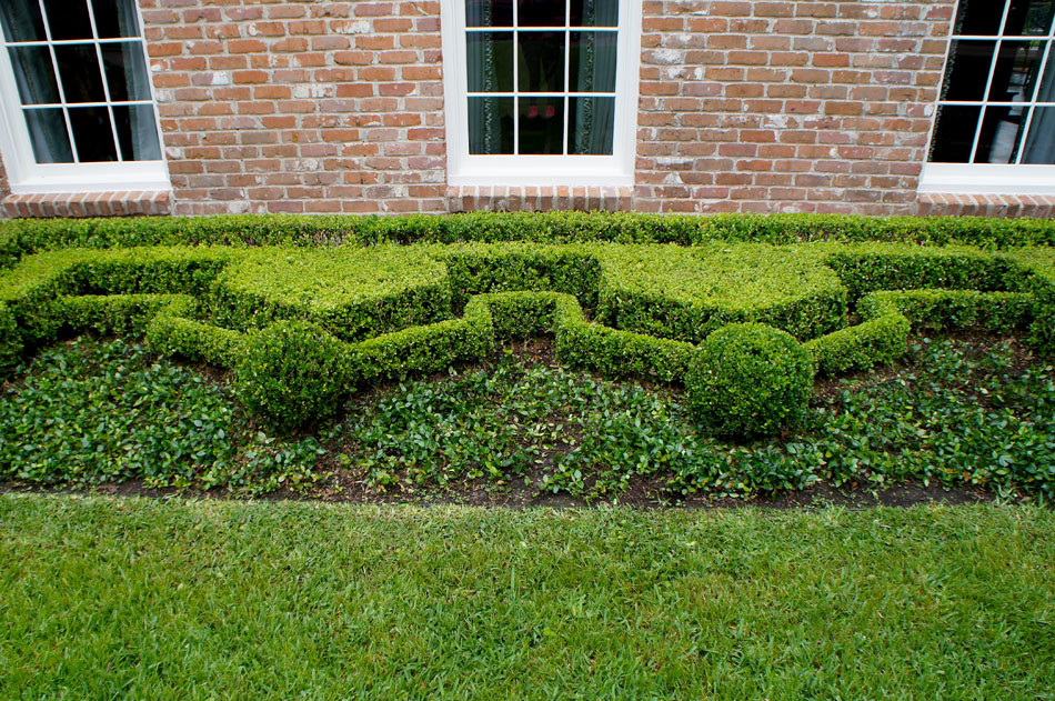 Close up of formal front garden. Symmetry and geometric hedging reinforces the english style of this home.