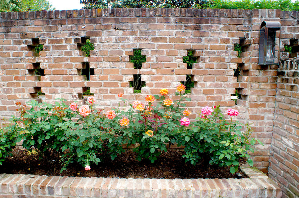 Close up of antique rose garden which lines the brick wall behind the garage.