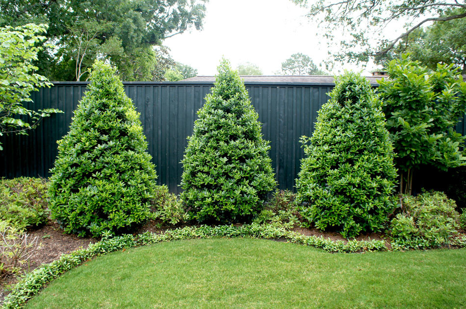 Cone trees anchor transitional lawn.