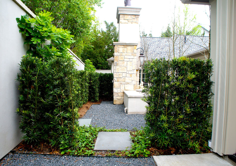 View from the side yard entering the courtyard. Japanese Yews and Sandy Leaf Fig Ivy separate the two spaces.