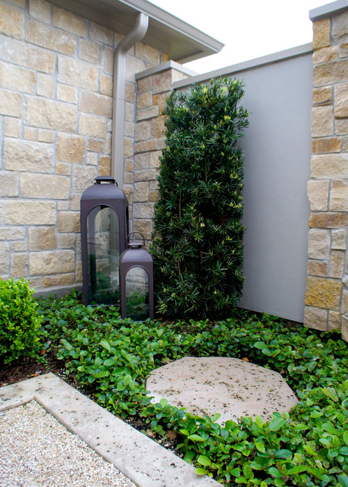 Left:  Japanese Yew and Sandy Leaf Fig Ivy green up the corner of this courtyard entryway. A concrete stepping pad with a rock salt finish gives access to outdoor lanterns.