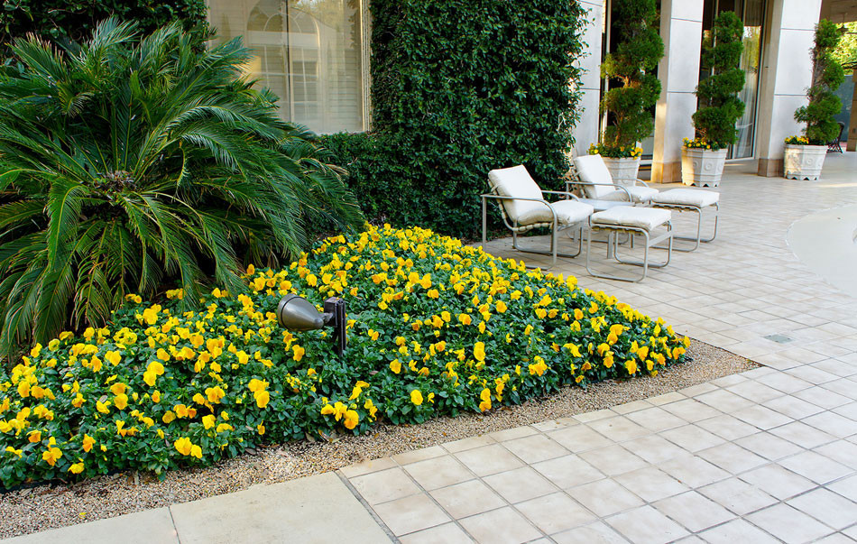 Outdoor lounge seating sits beside seasonal color framed by poolside hardscape. Container grown Italian cypress and spiral juniper add interesting visual elements and a grand, ivy-covered wall give the space a geometric, art deco appeal.