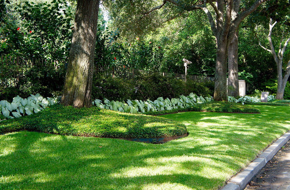 Oak trees line the entrance and are nestled in beds of english ivy. White caladium line the space and offer an interested color contrast.