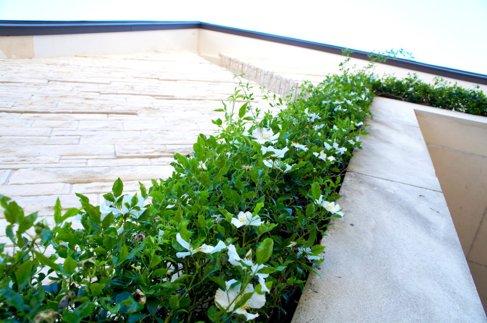 A blooming Cherokee Climbing Rose frames the top of the chapel entryway.