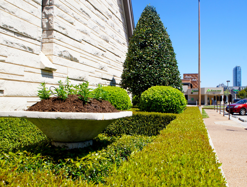 Color planters sit within a geometric boxwood frame that is anchored by boxwood globes and a cone-shaped Oakleaf Holly.