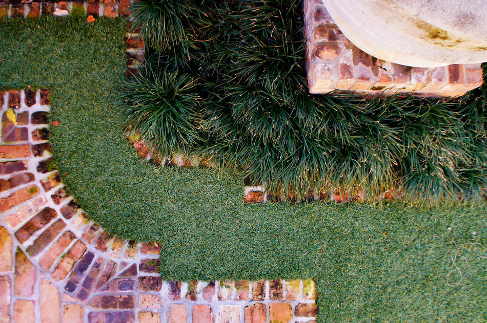 Brick border separates synthetic lawn from Dwarf Monkey Grass surrounding container-grown citrus trees.