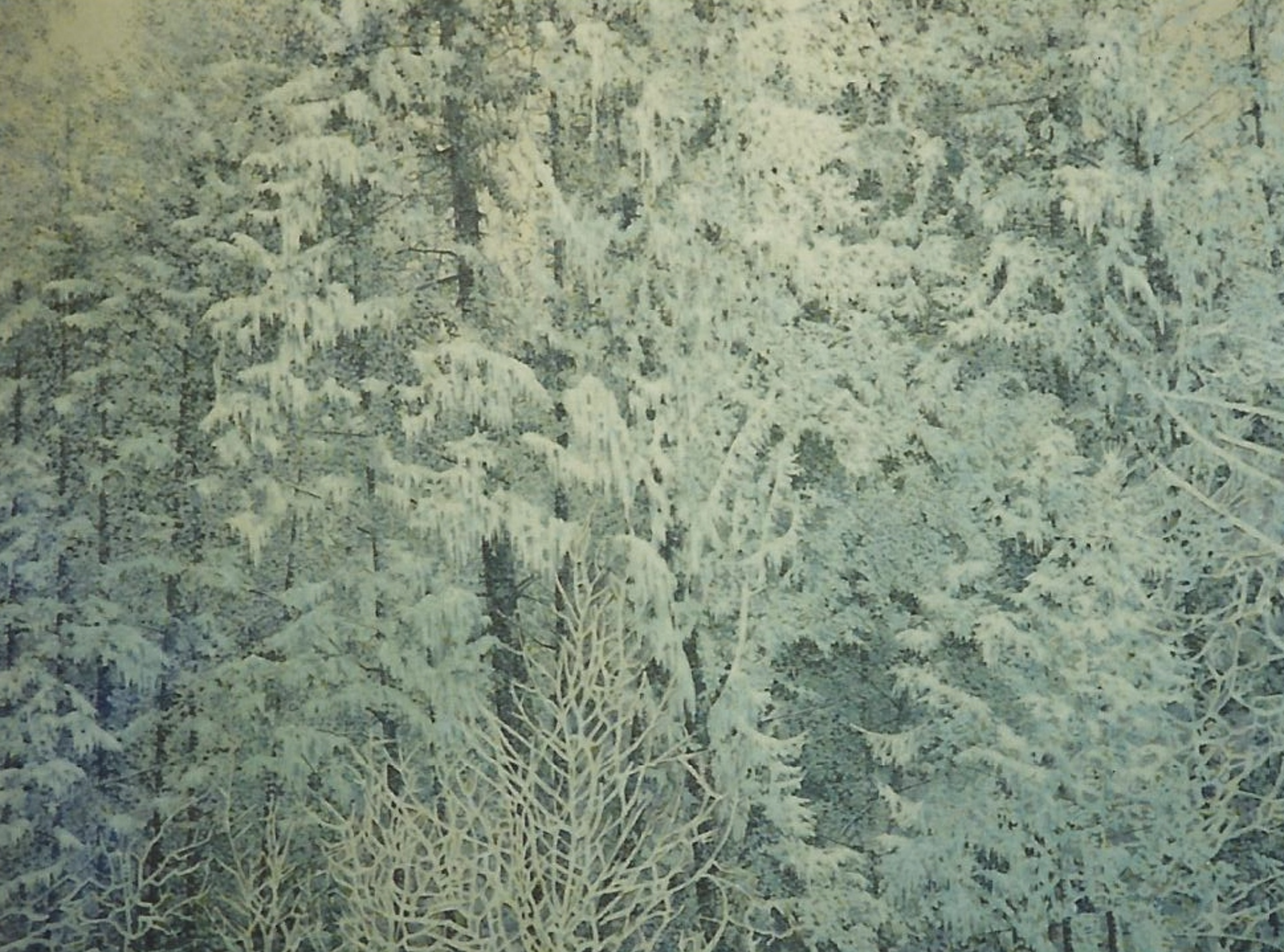 "silent snow - 1987, Acrylic on canvas, 30x40"" Private collection, Victoria, BC"