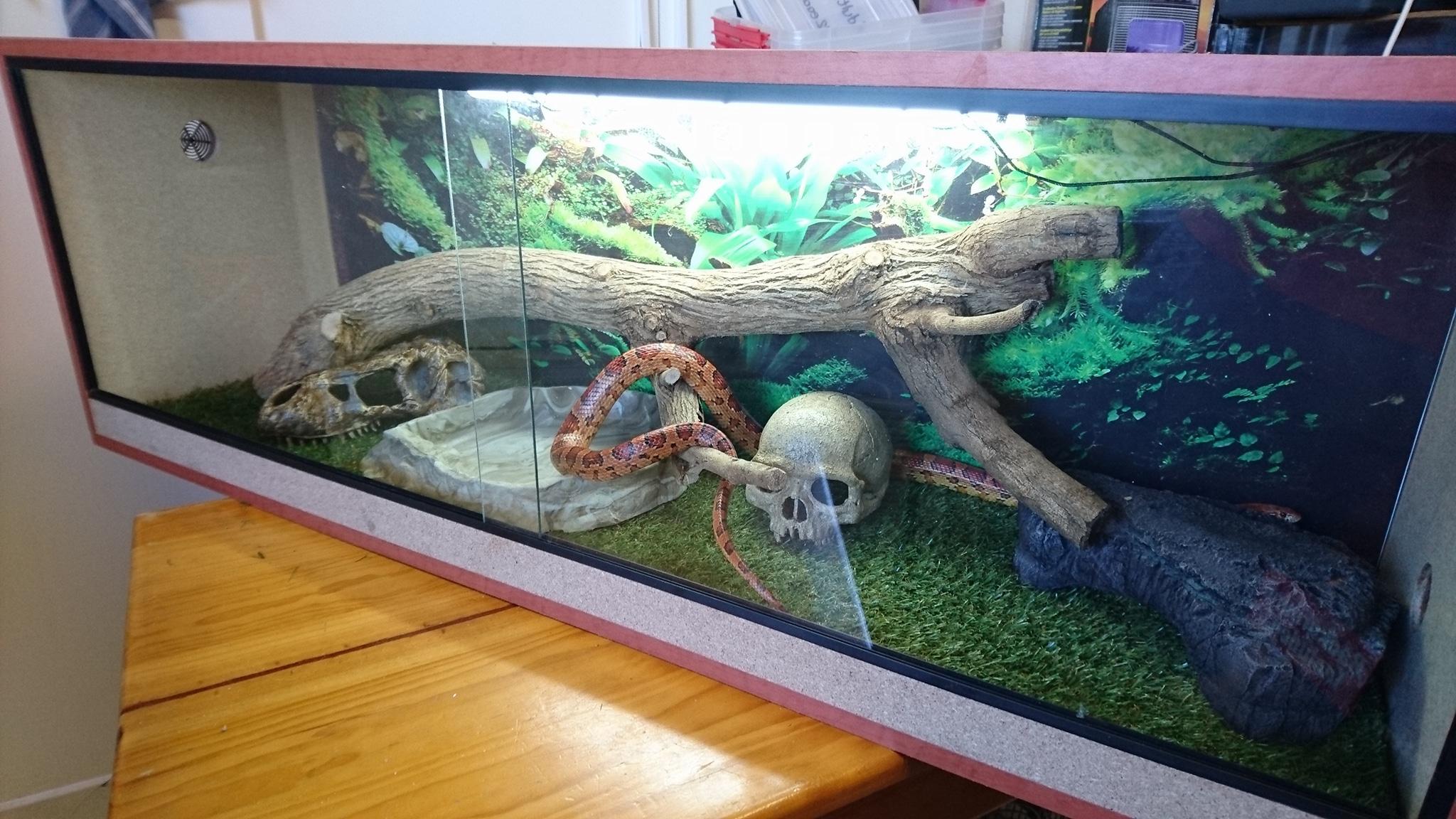 Reptile Tank.jpg
