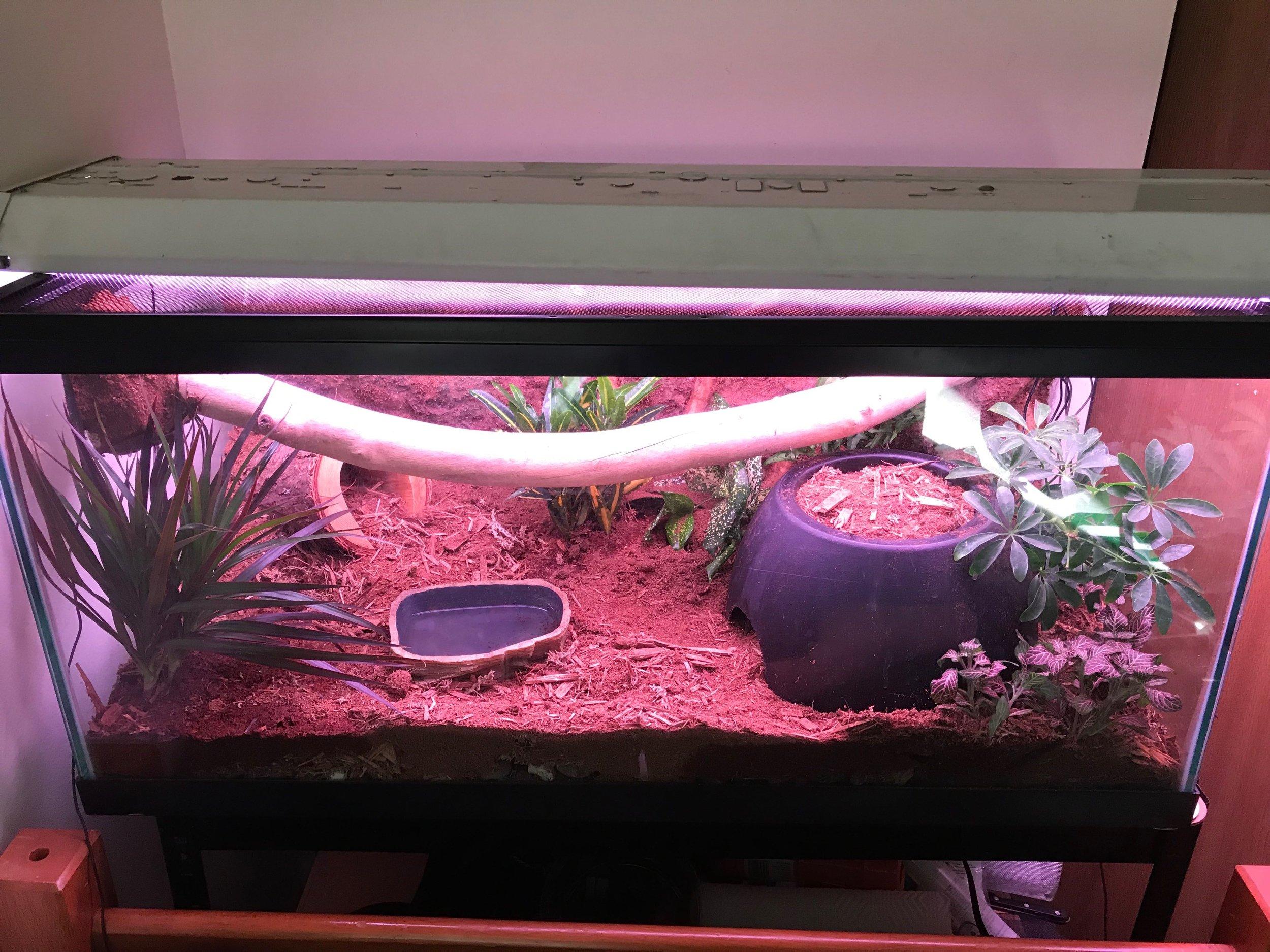 reptile_tank_vergepets_.JPG