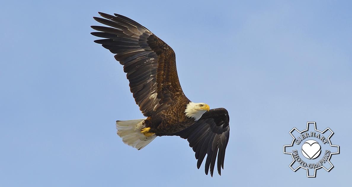 BWCVB ad element New Eagle Photo.jpg