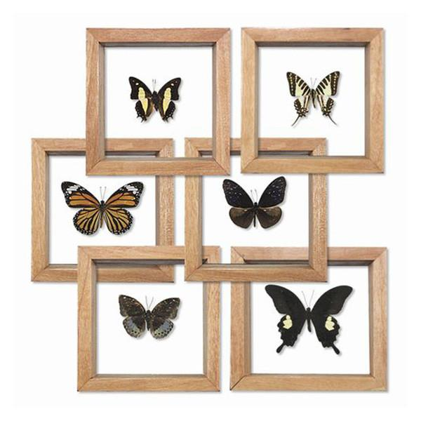 World_Buyers_Single_Butterfly_Double_Glass_600_1024x1024.jpg