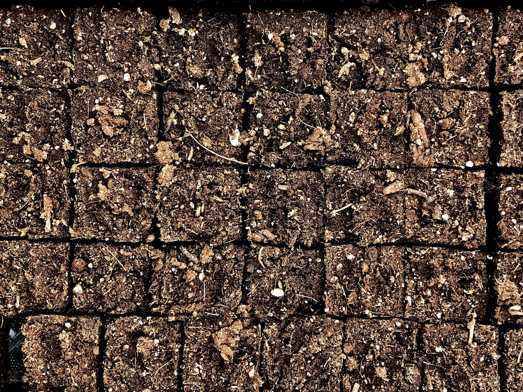 1737_SP_417 soil blocks from vicki johnson.jpg