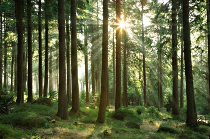 sun-in-the-woods.jpg