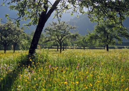 orchard-meadow.jpg