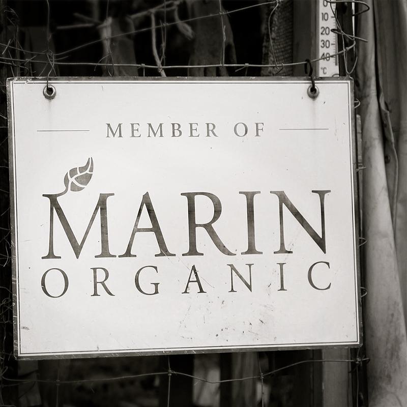 800x800_marin_organic3.jpg
