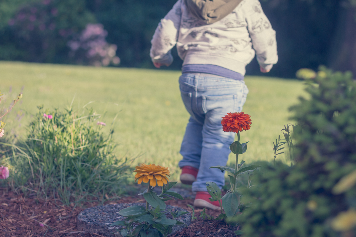 Toddler-age boy runs away from parents through a flower bed.jpg