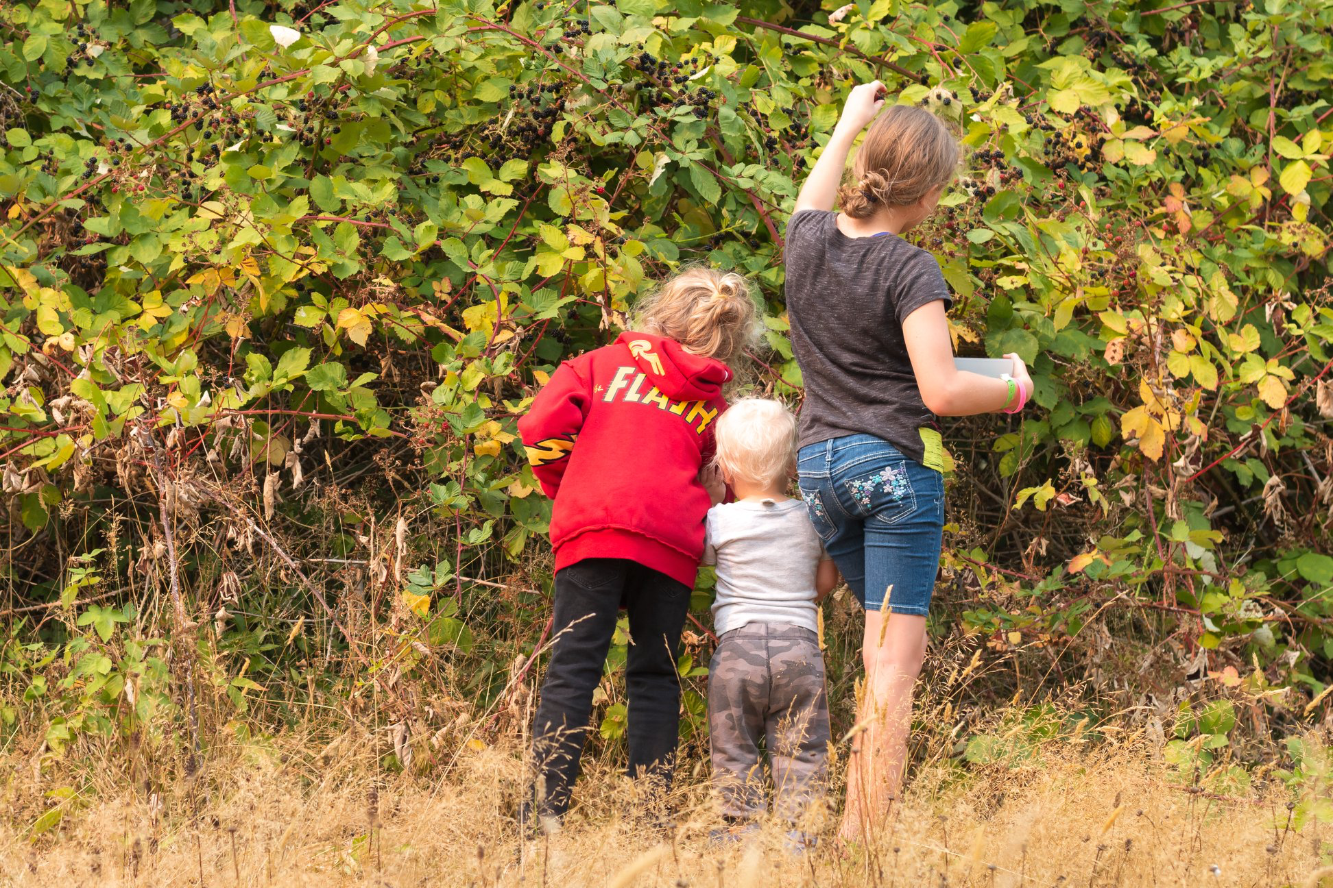 Two of these people are very good at picking blackberries.