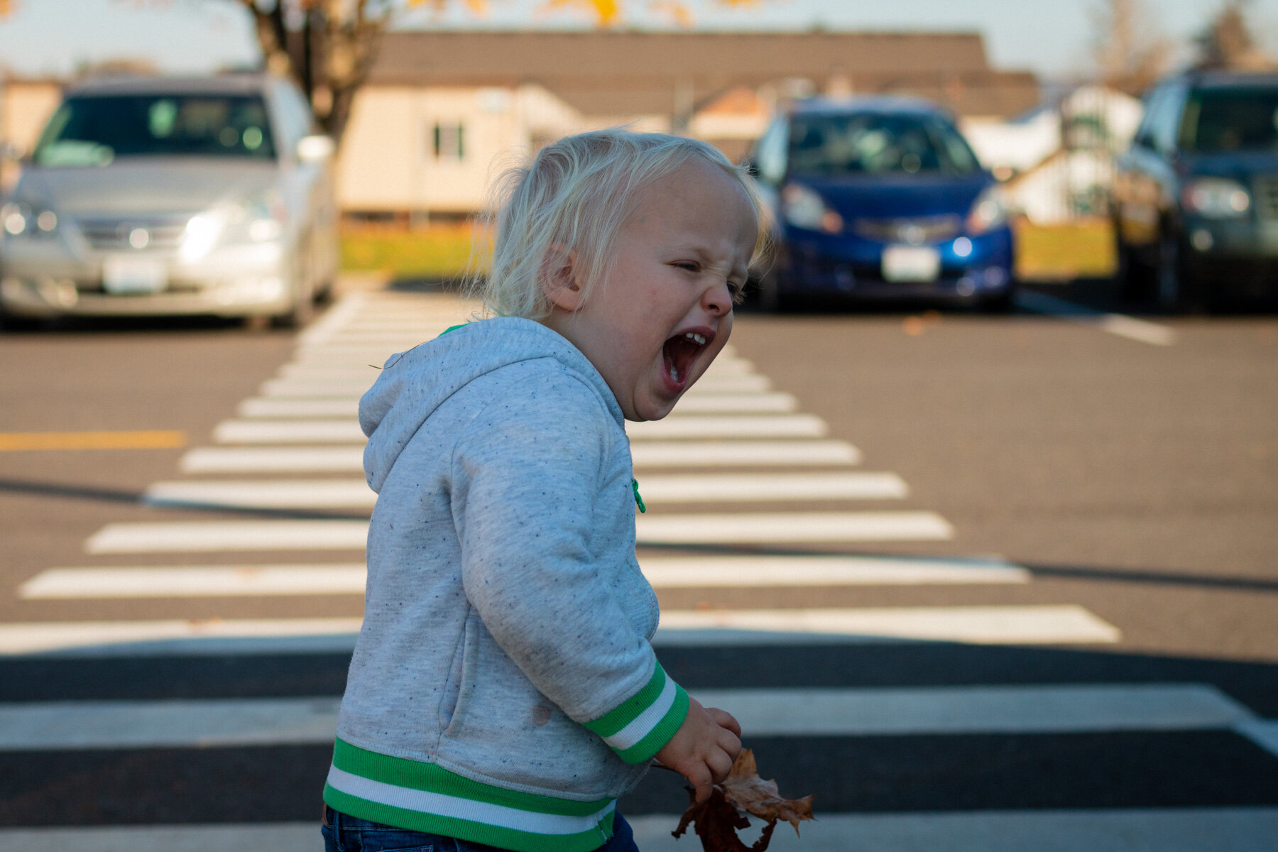 Two-year old blond boy collecting leaves in a school crosswalk.