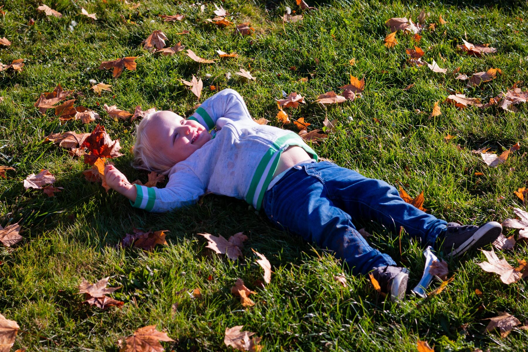 Two-year old blond boy lying in grass on an Autumn morning.