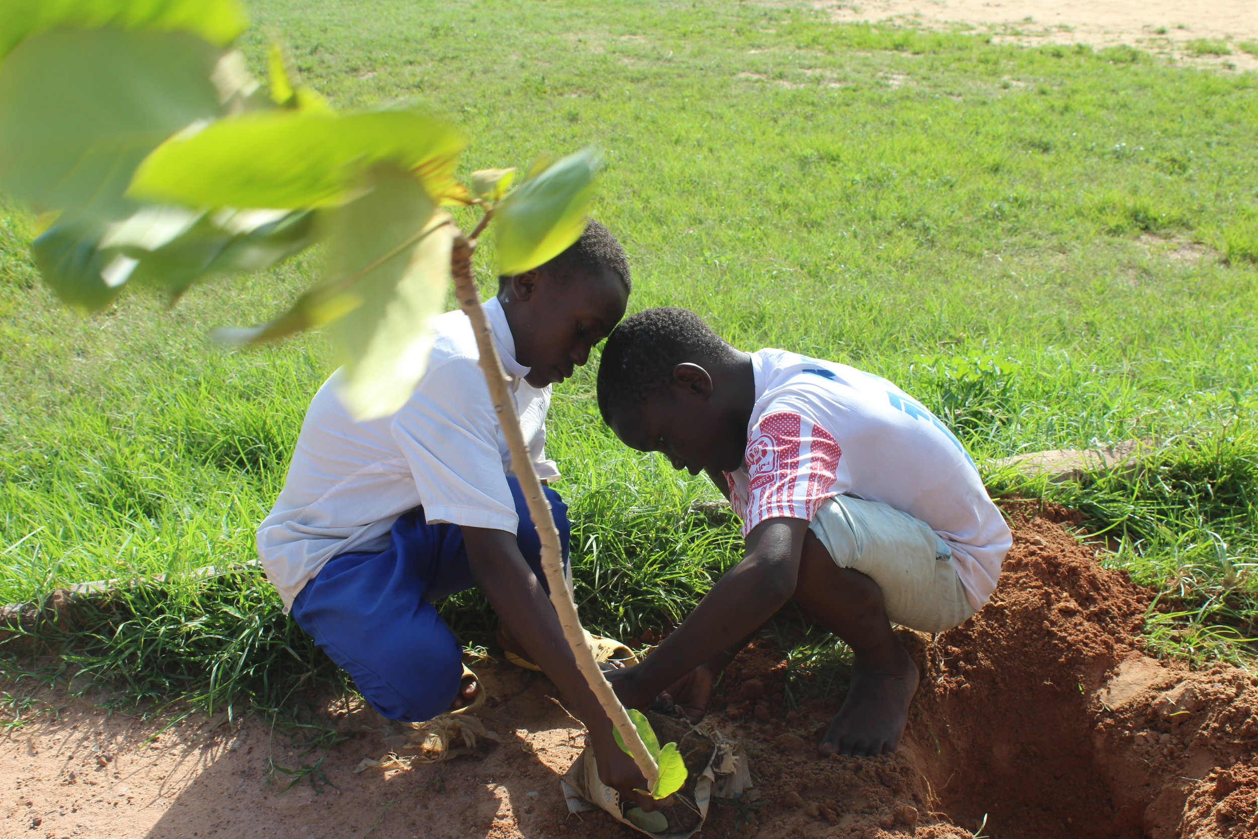 Young advocates planting a tree