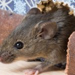 Mouse-150x150.jpg