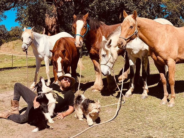 Tune into 4ZZZ  BRISBANE at 10.30am this Tuesday!!! I'm having a chat with Cam Pekin about Sweat Baby Sweat and living life with these beautiful horses 📻  @echoboom4zzz