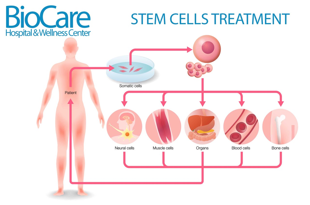 stem-cells.jpeg
