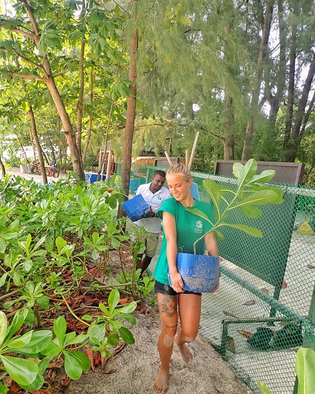 It's not just marine projects that our volunteers get involved in, they also participate in terrestrial conservation work too. Here are our volunteers replanting some of the indigenous flora from our tree nursery along Long Beach. This is to prevent beach erosion and ensure our beautiful, sandy beaches are maintained for years to come. #tengahislandconservation #TIC #conservation #habitatrestoration #beacherosion #beautifulbeaches #terrestrial #saveourplanet #protecttheearth #loveourplanet #beautifulearth
