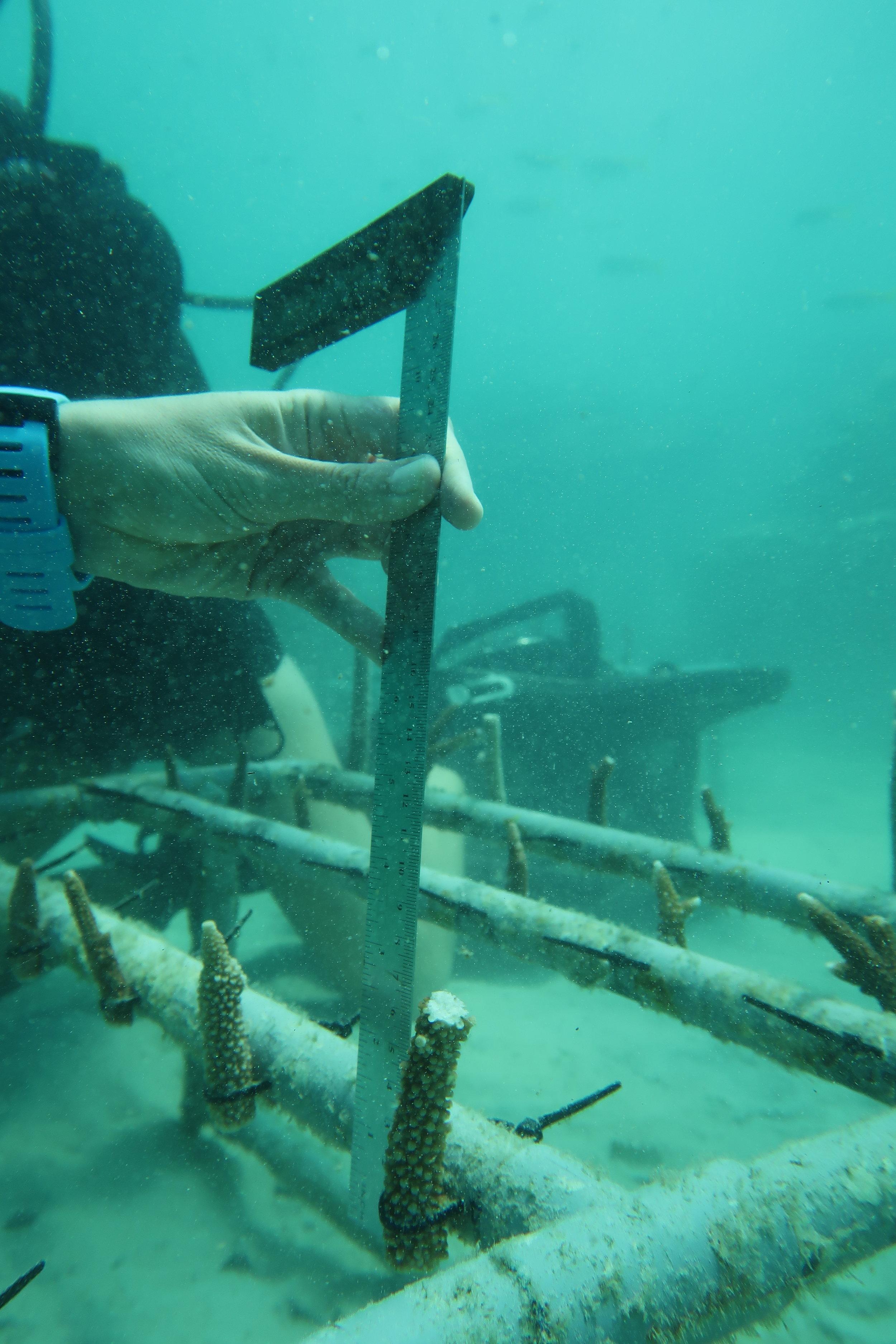 Coral reef preservation & monitoring 5.JPG