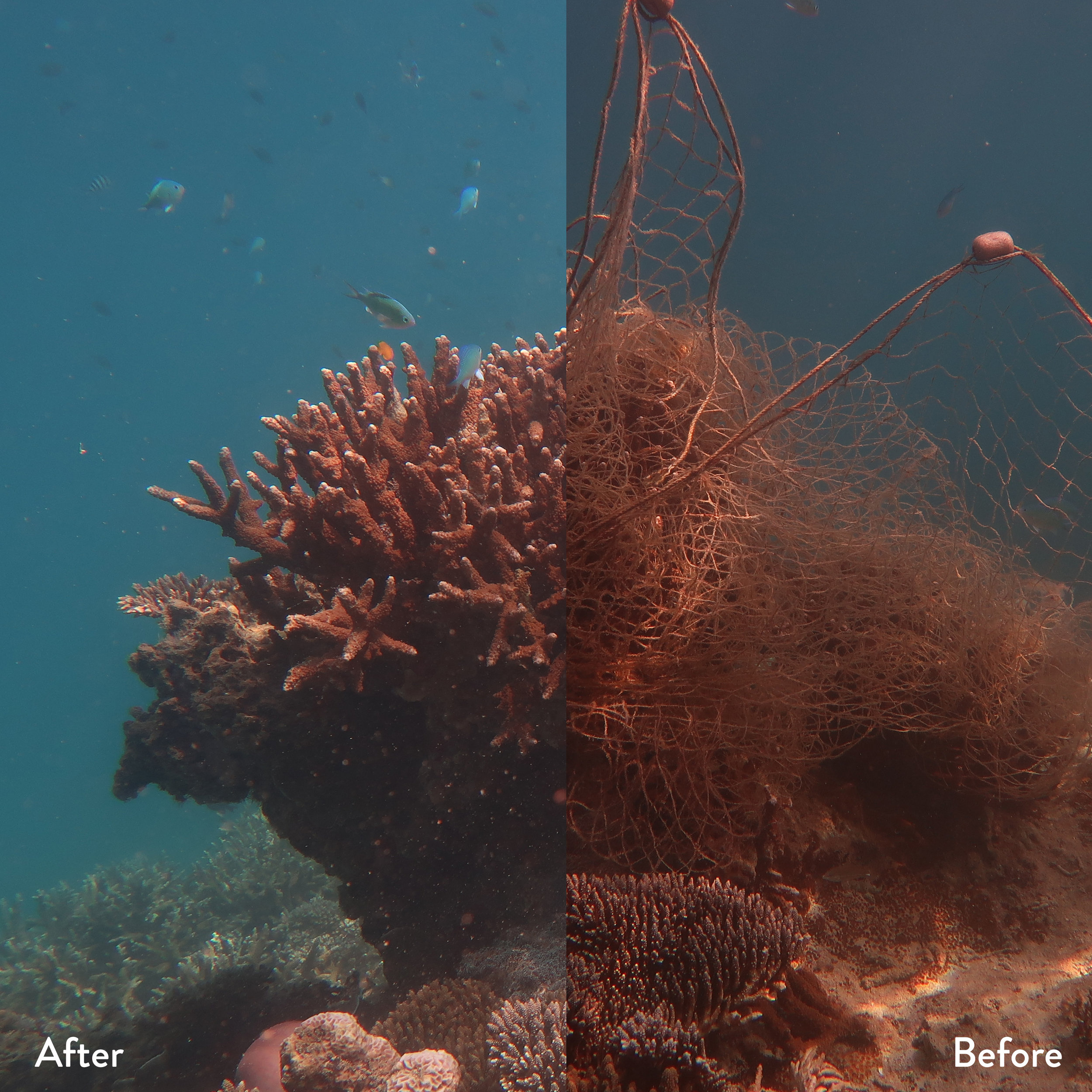 A photo shows before and after ghost gear removal from a coral near Pulau Tengah in 2019.