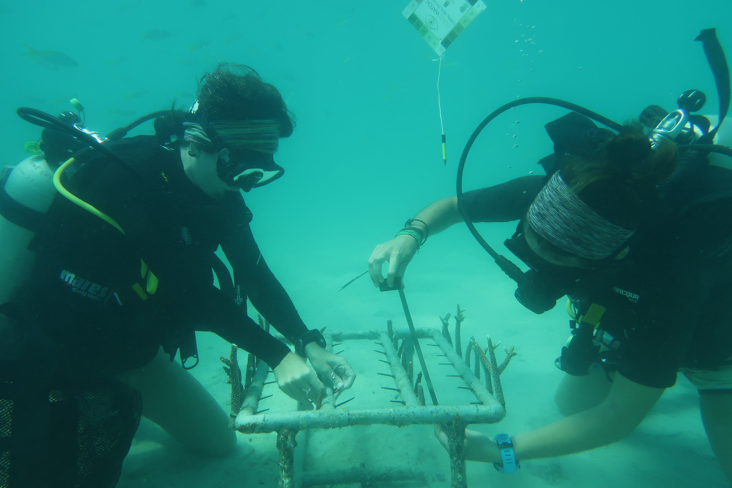 Tengah Island Coral Restoration.JPG