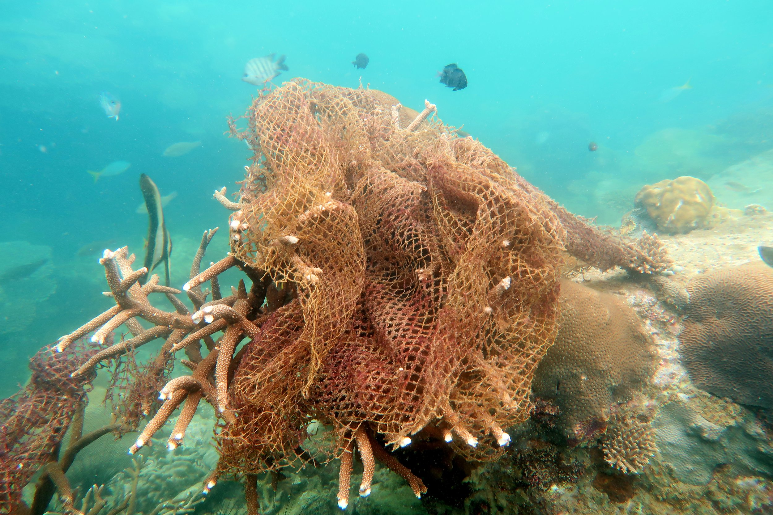 the most deadly form of marine debris - a ghost net entangling coral on pulau tengah