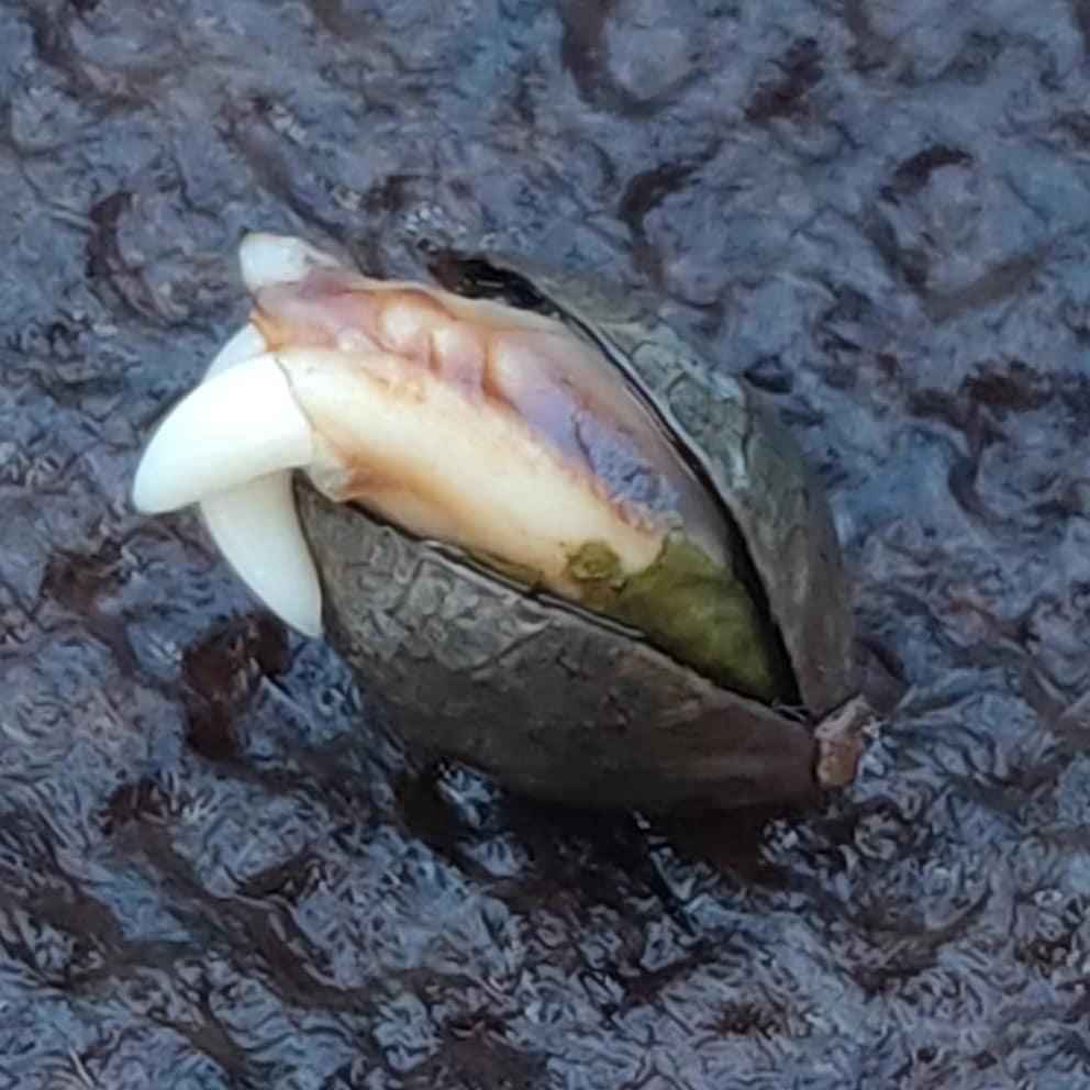 Seedling with Double Embryo
