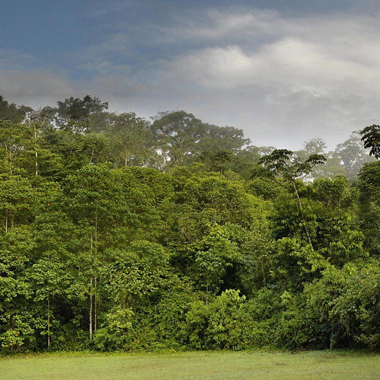 costa-rica-rainforest-miguel-vieira.jpg